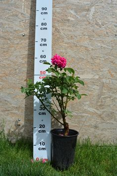 Prindere garantata Plants, Fragrance, Plant, Planets