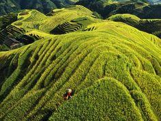 Valley of Longji (Dragon Spine)