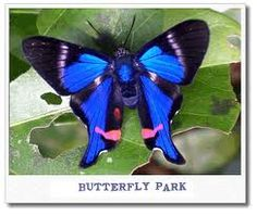 TROPICAL BUTTERFLY - Google Search