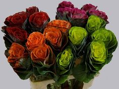 Today in the OZ Export webshop Specials: Brassica Paint Mix, 60 cm, x 20 st. by Multi Color Flowers.