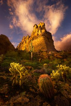 A variety of desert foliage including Saguaro, Barrel and Cholla Cactus showcased by some fortuitous lighting conditions in Arizona& Superstition Mountains at sunset. The Places Youll Go, Places To See, Superstition Mountains Arizona, Arizona Mountains, Beautiful World, Beautiful Places, Amazing Places, Mountain Love, Beau Site