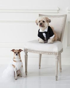#MarthaStewartPets Wedding Dress and Veil, $15.99, Wedding Bow Collar, $12.99, Leash, $14.99; petsmart.com.