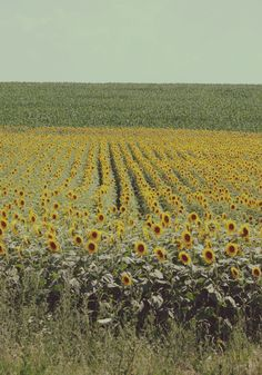 sunflowers and sunshine.#Repin By:Pinterest++ for iPad#