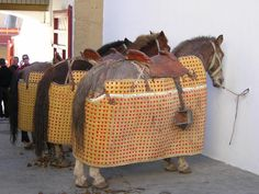 pepe ortiz torero | Sobre el peto para los caballos. Por Luis Ramón Carazo