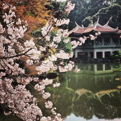 A view of the cherry blossoms at Shinjuku Gyoen National Garden in #Tokyo. Photo courtesy of xsnapshots88 on Instagram.