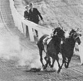 Seabiscuit, War Admiral Racing to the Finish - In the greatest match race in history, Seabiscuit finished four lengths ahead of War Admiral in Baltimore on Nov. All The Pretty Horses, Beautiful Horses, Animals Beautiful, Sport Of Kings, Thoroughbred Horse, All About Horses, Racehorse, Horse Love, Courses