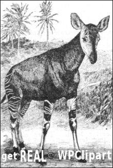 Get Real - with Okapis okapi art
