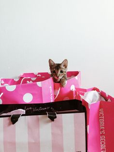 #home #homeinspiration #inspiration #bengal #bengalcat #victoriassecrets #vs #pink #shopping #cat