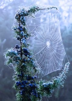 Beautiful spider web, added as art in nature! Art Et Nature, All Nature, Amazing Nature, Science Nature, Nature Water, Belle Photo, Mother Earth, Beautiful World, Stunningly Beautiful