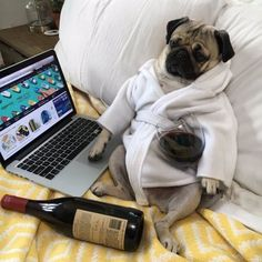 19 Indisputable Facts About Pugs Cute Funny Animals, Funny Animal Pictures, Cute Baby Animals, Funny Dogs, Cute Dogs, Pug Facts, Shih Tzu Hund, Doug The Pug, Baby Pugs