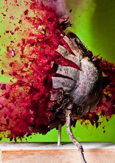 Pictures of the moment a bullet shatters food by Alan Sailer. High Speed Photography, Art Photography, Shatter Image, High Shutter Speed, Air Cannon, Pot Image, Fotografia Macro, Weird News, Everyday Items