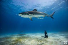 We LOVE <3  Eusebio und Christina Saenz de Santamaria sind Free Diver die ihre Adventures in unglaublich tollen Unterwasserbildern festhalten...   Tauch ein in eine blaue Welt!   http://www.oneoceanonebreath.com