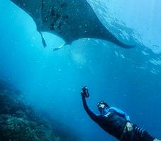 Swimming with Mantas @ Mantaray Island Resort via www.mantarayisland.com #incredible#