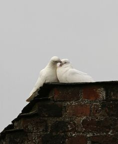 Dove Her Madly by Dan Belton ( No Badger Cull ) on Flickr.