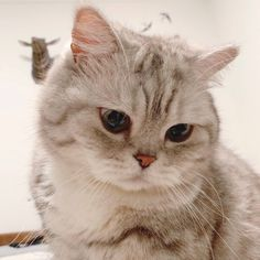 Funny Cute Cats, Cute Baby Cats, Cute Funny Animals, Super Cute Animals, Cute Little Animals, Cute Animal Photos, Funny Animal Pictures, Cute Cat Wallpaper, Cat Icon