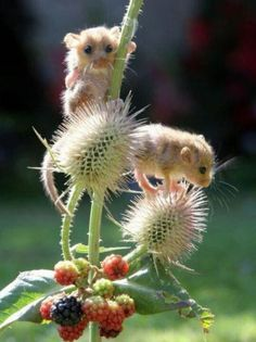 adorable mice