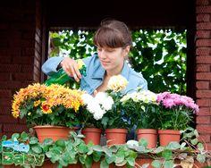 Llenar la casa de plantas y flores le dará la vida y oxígeno que necesita, además de que se verán muy bonitas por todo el lugar.