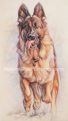 German Shepherd running Pet Portrait by R.Gotowicz https://www.etsy.com/listing/179178155