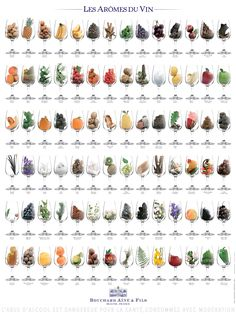 This poster details the 84 aromas most commonly encountered in wines. Indeed, it is through the aromas of wine that wine is tasted. Our tongue is limited to the primary tastes perceived by taste recep The Wine Shop, Wine Facts, Wine Flavors, Wine Education, Types Of Wine, Wine Guide, In Vino Veritas, Wine Cheese, Wine And Beer