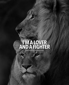 Inspirational quote and saying about life for teenagers, teen girls, and adults. Motivational Quotes 377 Motivational Inspirational Quotes for success 90 Leo Quotes, Strong Quotes, Qoutes, Tiger Quotes, Motivational Quotes For Success, Inspirational Quotes, Top Imagem, Lion And Lioness, Lion Love
