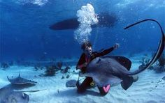 Curious stingrays flock around divers at Stingray City off the Cayman Islands
