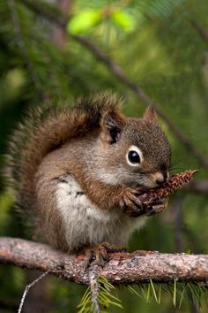 Squirrel. ❣Julianne McPeters❣ no pin limits