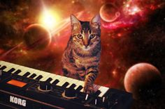 CATS ON SYNTHESIZERS IN SPACE  #cat #KORG