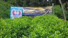Tropas de la Octava Brigada  lograron la erradicación de un laboratorio de coca en Risaralda