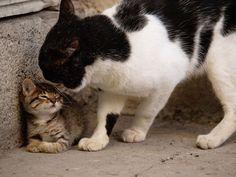 【約130点】世界の愛らしい猫さんたちが勢揃い!!岩合光昭の写真展「ねこ歩き」が佐野美術館で開催