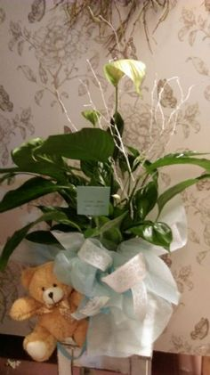 planta para regalar por el nacimiento de un beb