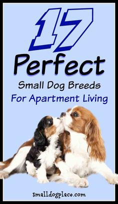 Best Small Dogs For Apartment Living