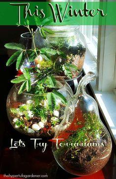 Let's Try Terrariums This Winter For Indoor Gardening