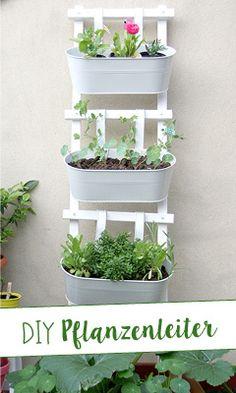 Balcony Plants, Balcony Garden, Herb Garden, Garden Plants, Plant Projects, Garden Inspiration, Flower Pots, Planting Flowers, Planter Pots