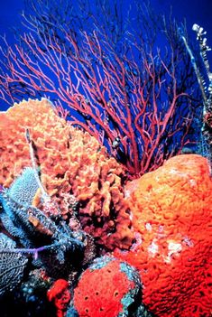 Beautiful coral reef around the world