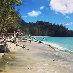 【rowdy_line】さんのInstagramをピンしています。 《Secluded beaches are nice, especially when they come with a swing. #境浦 #境浦海岸 #小笠原 #父島 #sakaiura #sakaiurabeach #chichijima #ogasawara #beach #pacific #ビーチ #海》