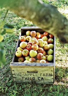 Country Living ~ apple harvest