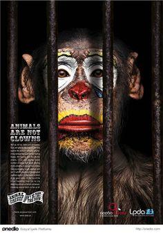 Hayvanlar palyaço değildir. Sirklere hayır!