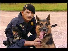 Cães recebem treinamento contra o crime