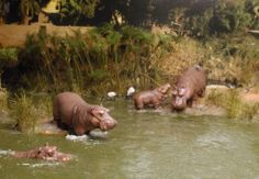 Fishing with hippos 1/35 Scale Diorama