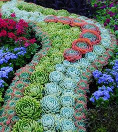 21 Best Hens And Chicks Planting Ideas Images Hens Chicks