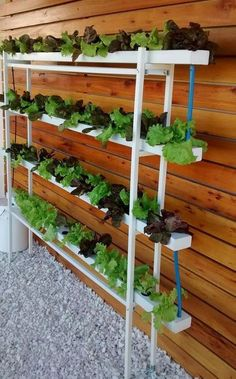 Cool Hydroponic Gardening For Beginners - Cool Hydroponic Gardening For Beginners If you are looking for Hydroponic gardening for beginners you've come to the right place. We have collect images about Hydroponic gardening for beginn… viralandtrend.