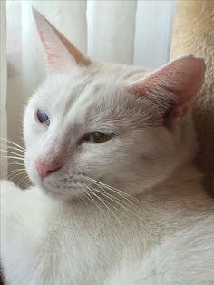 Funny Animals, Kitty, Cats, Little Kitty, Gatos, Kitty Cats, Humorous Animals, Kitten, Cat Breeds