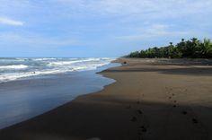 tortuguero national park attraction beach   - Costa Rica