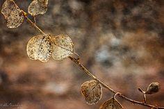 fall-nature-photography-autumn-colors-alex-greenshpun-9