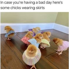 Always makes me happy 😂💀 - Cutest Baby Animals Funny Animal Jokes, Cute Funny Animals, Funny Cute, Cute Dogs, Cute Babies, Funny Memes, Memes Humor, Funny Videos, Funny Drunk