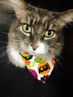 Frank is all ready for Halloween with this purrr-fect bandana!