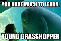learn much you have young grasshopper: 13 тыс изображений найдено в Яндекс.Картинках