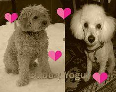 Bubu y Yogui