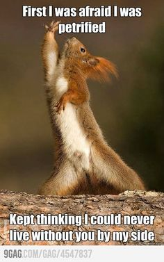 Dramatic Squirrel. Funny :)