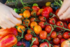 Rajče: od semínka po šťavnaté plody – CULINA BOTANICA Plant Wall, Growing Vegetables, Backyard Patio, Plants, Food, Gardening, Compost, Living Walls, Essen